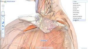 Google Body Browser, recorre el cuerpo humano en 3D