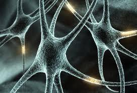 neuronas-Facebook